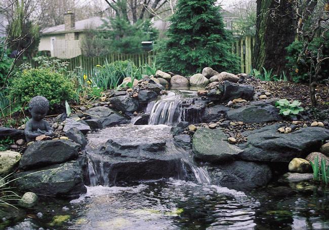 pond_images2